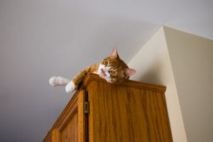 An orange cat with white paws a white on the stomach and face lays down on top of a wooden cabinet in a room with cream walls and a white ceiling.